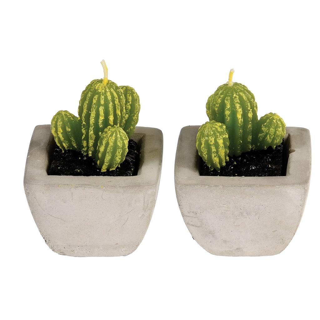 27168-sviecka-kaktus-sada-2